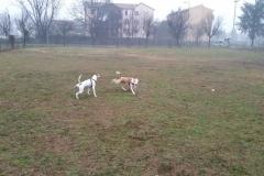 asilo-cani-corrono