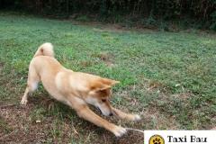 cane-che-gioca-1