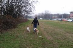 dog-sitter-nel-prato
