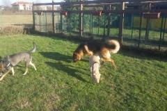 pensione-cani-giardino