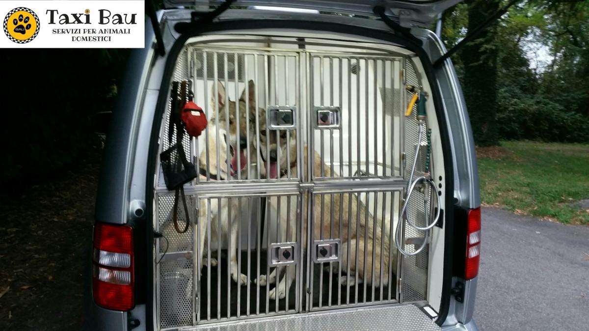 trasporto-cani