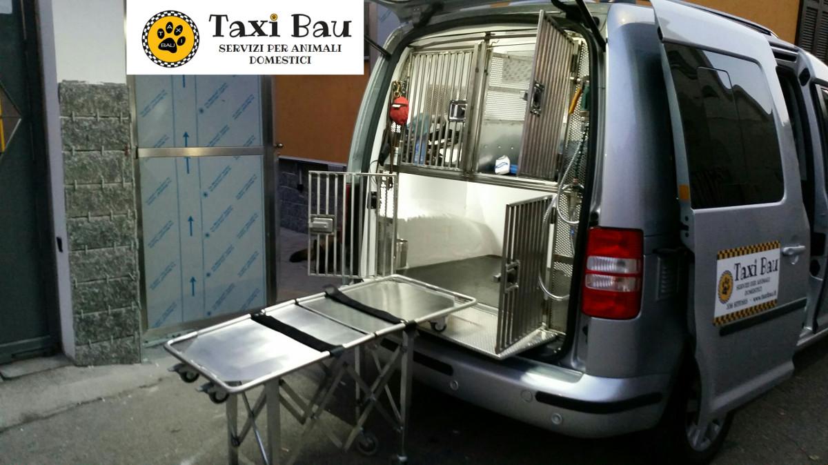 trasporto-cani-barella